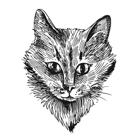 moggie: hand drawn illustration head of cat. Sketch style. Ink drawing of cat. Illustration