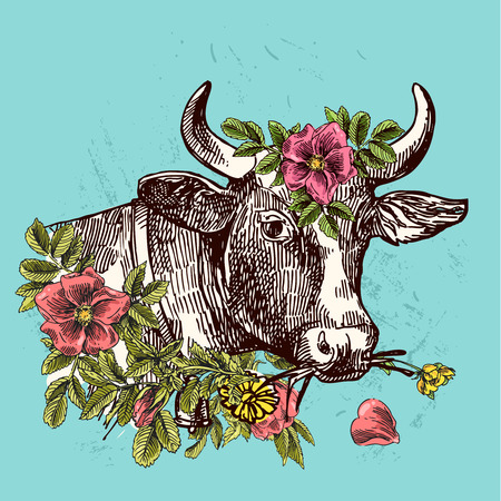 bull pen: Beautiful hand drawn illustration head of cow. Sketch style. Use for poster, tattoo, print t-shirt.