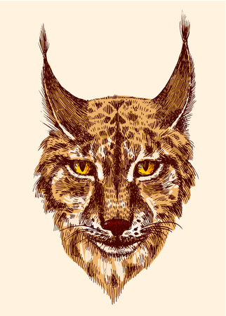 bared teeth: Head of beautiful lynx. illustration with head of wild cat with bared teeth. Hand drawn sketch. Ink painting. Design element useful for print for t-shirt. Illustration