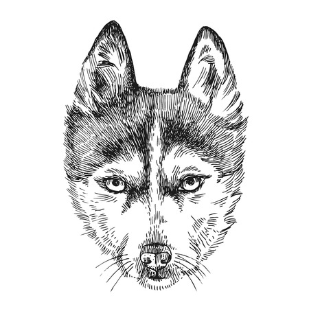 dog pen: Beautiful hand drawn vector illustration sketching of husky. Sketch style drawing. Use for postcards, print for t-shirts, posters, tattoo. Illustration