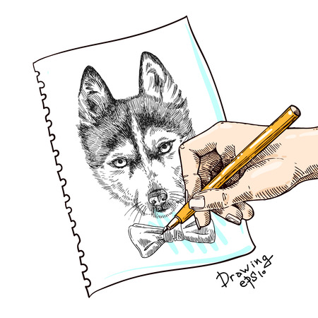 dog pen: Beautiful hand drawn vector illustration sketching of husky. Hand drawing dog on the paper Illustration