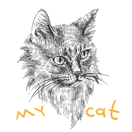 moggie: Vector hand drawn illustration head of cat. Boho style poster. Ink sketch drawing of animal.