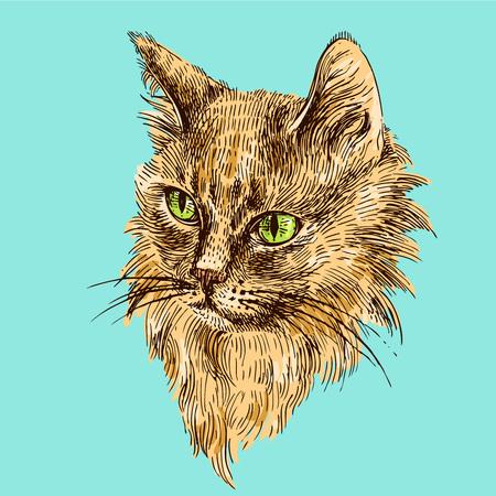 vector dibujado a mano ilustración de la cabeza del gato. cartel del estilo boho. Tinta de dibujo boceto de animales.