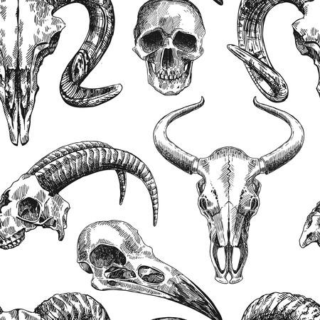 cabras: Vector ilustración boceto cráneo animal. Dibujo a mano. estilo boho. El uso para carteles, tarjetas postales, impresión de camiseta, tatuaje.