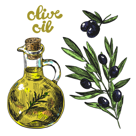 Hand drawn vector illustration olive oil and olives.  Sketch style. Use for  package design and web.