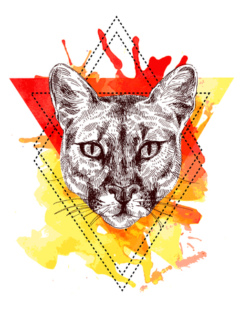 lince: mountain lion sketch illustration