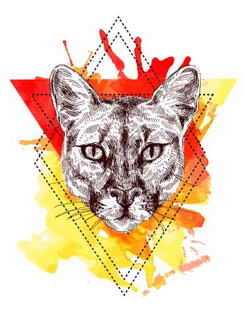 the lynx: mountain lion sketch illustration