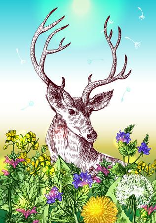deer and wildflowers.