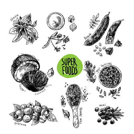 Hand drawn vector illustration of super foods. Sketch style drawing. Goji berries, acai, stevia, coconut, guarana, kerob, chia seeds.
