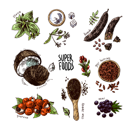 Hand drawn vector illustration superfoods. Sketch style drawing. Goji berries, acai, stevia, coconut, guarana, kerob, chia seeds.  Ilustração