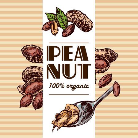 Peanut sketch illustration. Hand drawn beautiful set of groundnut. Illustration