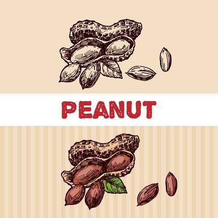 Nuts sketch illustration. Beautiful hand drawn illustration