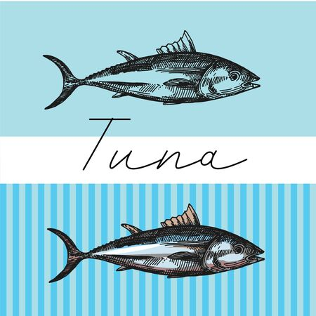 Tuna sketch vector illustration. Hand drawn set of pictures with fish. Food illustration for menu of care. Stock Illustratie