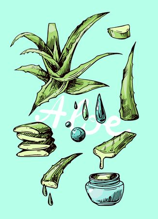 Aloe vera sketch vector illustration. Hand drawn style.