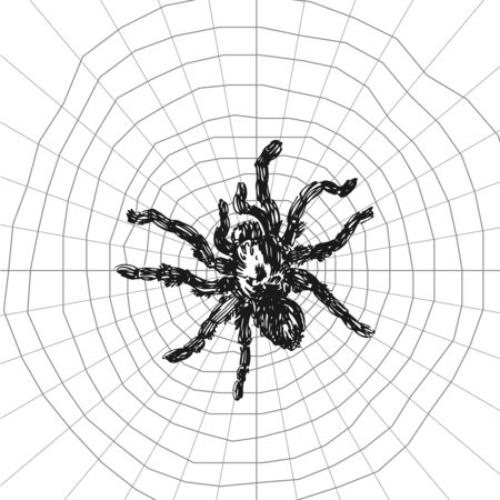Spider sketch vector set of illustration. Hand drawn style picture. Illustration