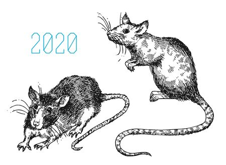 Rat sketch vector illustrations. Hand drawn picture with mouse. Ilustração