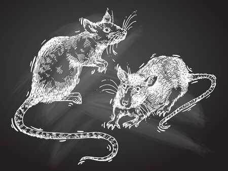 Rat sketch vector illustrations. Hand drawn picture with mouse. .