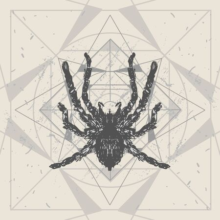 Spider and sacred geomerty  sketch vector  illustration. Hand drawn style picture. Иллюстрация