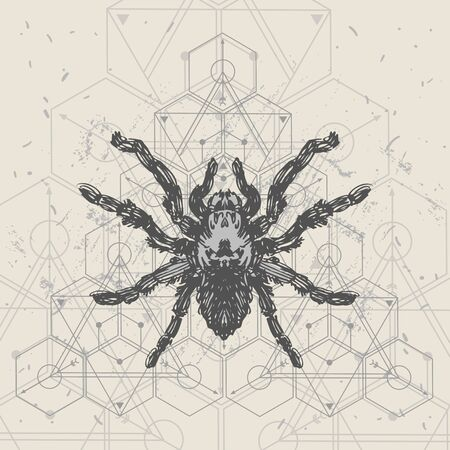 Spider and sacred geomerty  sketch vector  illustration. Hand drawn style picture. Illustration