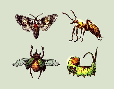 Iinsects hand drawn set. Beautiful vector illustration.