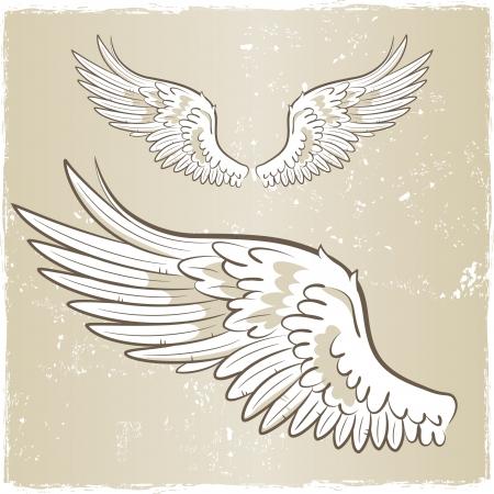 alas de angel: ángel alas blanco ilustración Vectores