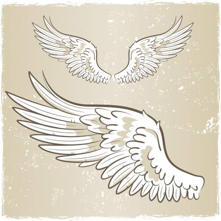 white angel wings illustration Vector
