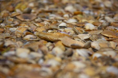 beautiful shells, tilt shift photography
