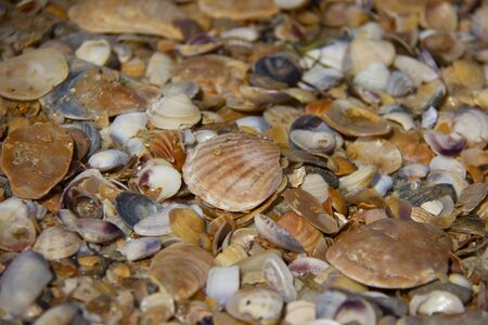 picture of shells on the sea beach