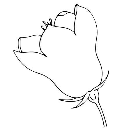 bell flower, doodle style vector element, coloring book, black and white botanical illustration by hand