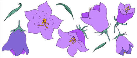 bell flower, vector set of elements in doodle style, freehand colored botanical illustration Ilustração Vetorial