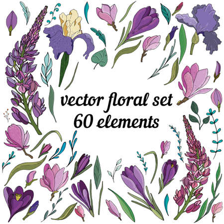 large vector floral elements set of purple and lilac crocuses, irises, lupins, botanical illustration of individual elements