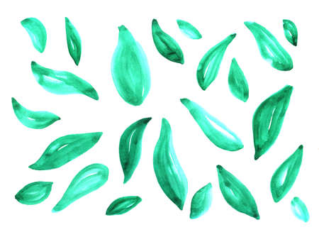 green leaves watercolor painted on a white background, abstract background texture handwritten with living materials
