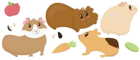 set of cute guinea pigs - beige, brown, ginger, smooth-haired and shaggy, cute pet rodent, vector illustration in flat style Vector Illustration