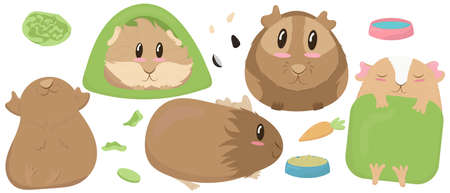 set of cute guinea pigs - beige, brown, house, tent, sleep, rest, blanket, green, bowl, feed, cabbage cute home rodent vector illustration in flat style