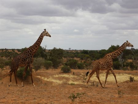 trip to kenya and safari between the wild animals of this country