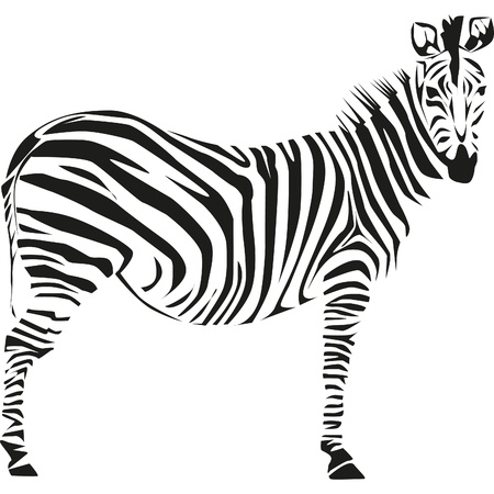 drawing of a zebra on the African savannah