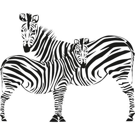 hooves: disegno della zebra su savana africana