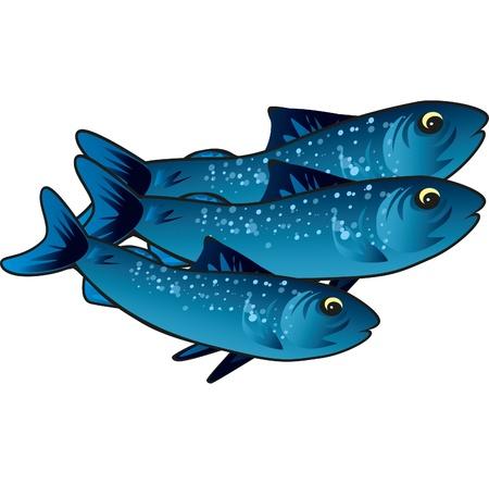 sardinas: Peque�o pescado azul que nada en el mar de buen comer Vectores