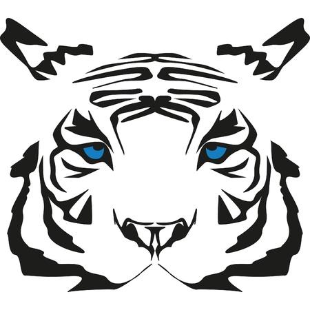 très rare tigre blanc aux yeux bleus