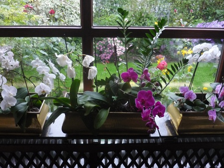 window of a greenhouse with orchids
