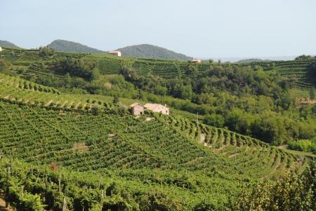 hills of Valdobbiadene in Italy Stock Photo