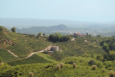 hills of Valdobbiadene in Italy photo