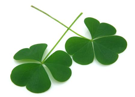 good luck: Two leaflets of a clover on a white background