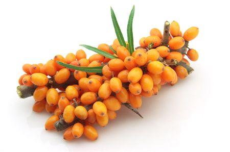Sea-buckthorn berries branch on a white background Stock Photo