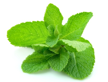 Fresh mint leaves - isolated on white
