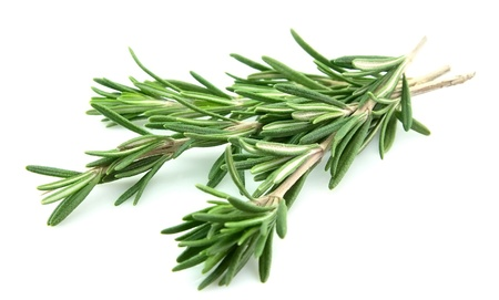 Fresh rosemary closeup on the white background  photo