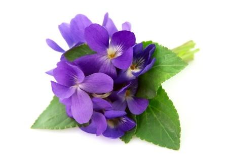 Fiori di legno viole close up