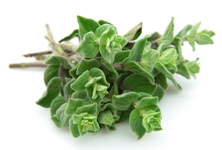 Oregano closeup on white background  Stock Photo
