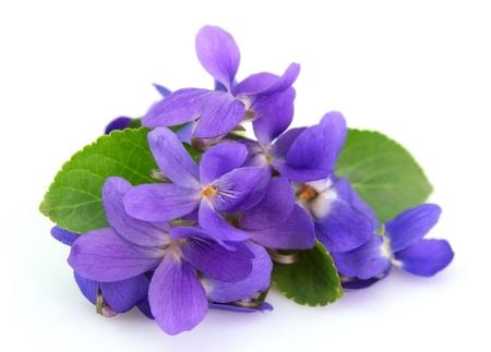 fleurs violettes de près
