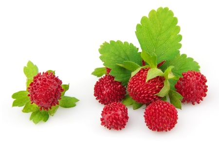 Wood wild strawberry with leaves on a white background